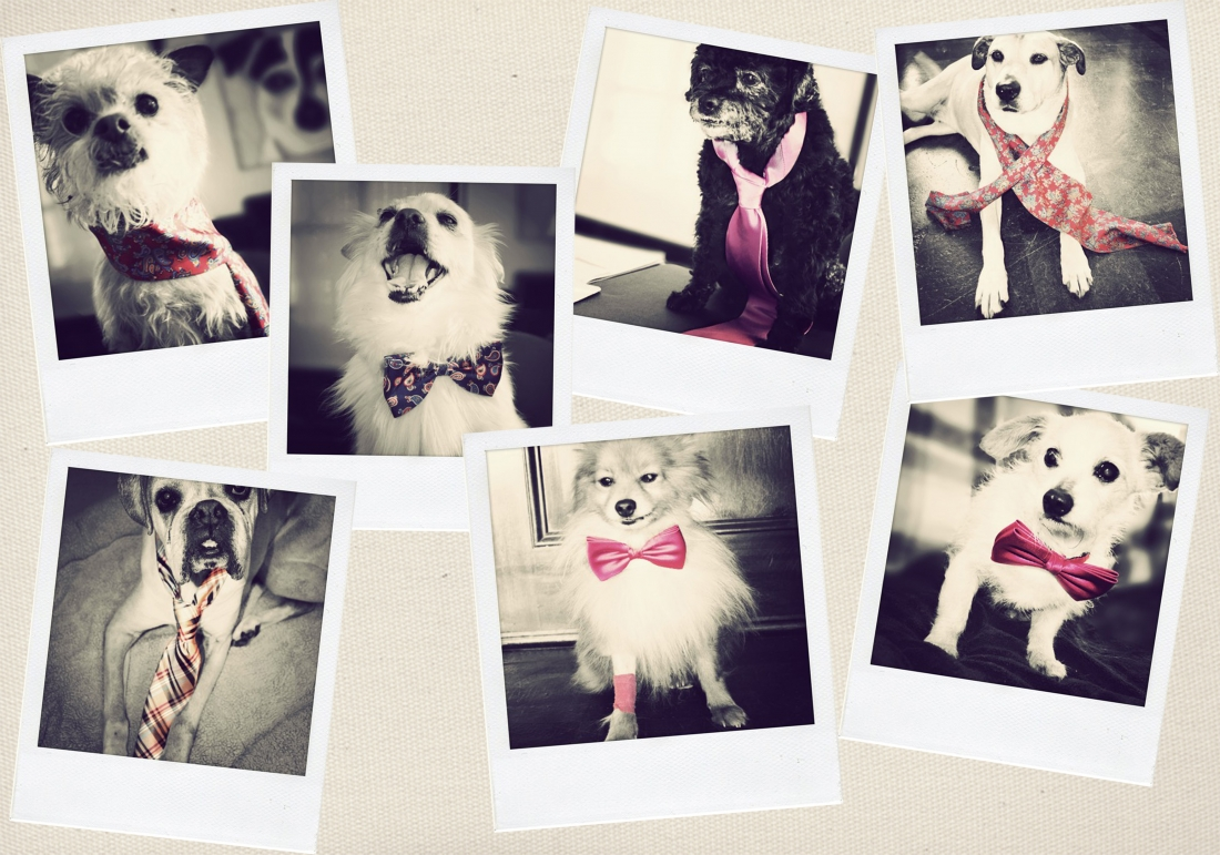 dogs-dressed-in-neckties-bow-ties