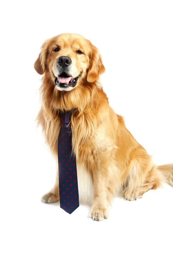 dog wearing human necktie
