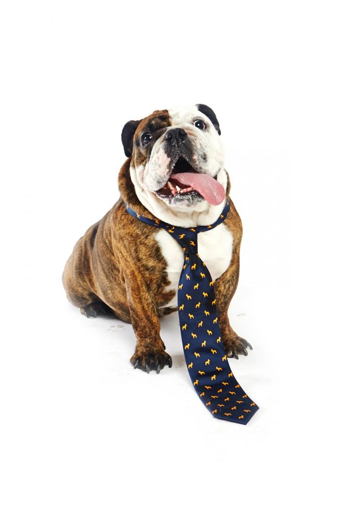 bulldog-dogsnties-sfspca-fundraiser