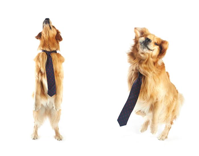 lancelot-necktie